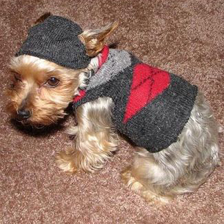 DIY Dog sweater, dog sock sweater, sock dog sweater, diy sock sweater dog, sock sweater diy, diy sock sweater