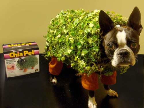 DIY dog halloween costume ,chia pet