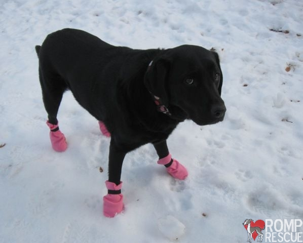 DIY Dog boots, do it yourself dog boots, make dog boots