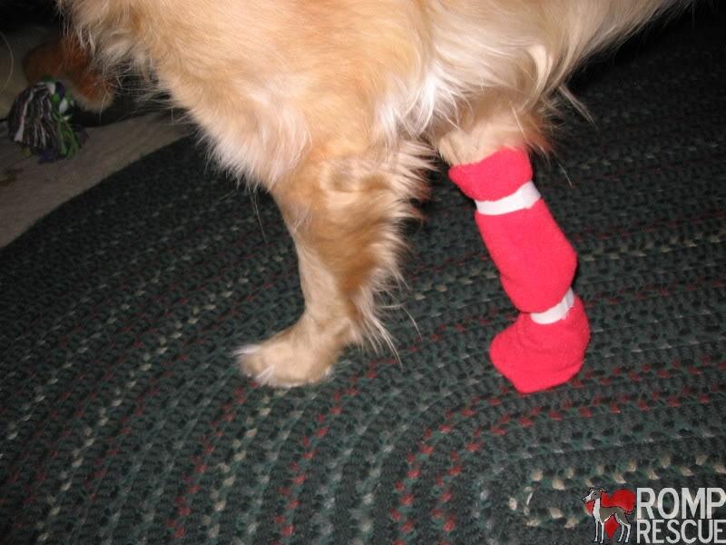DIY Dog boots
