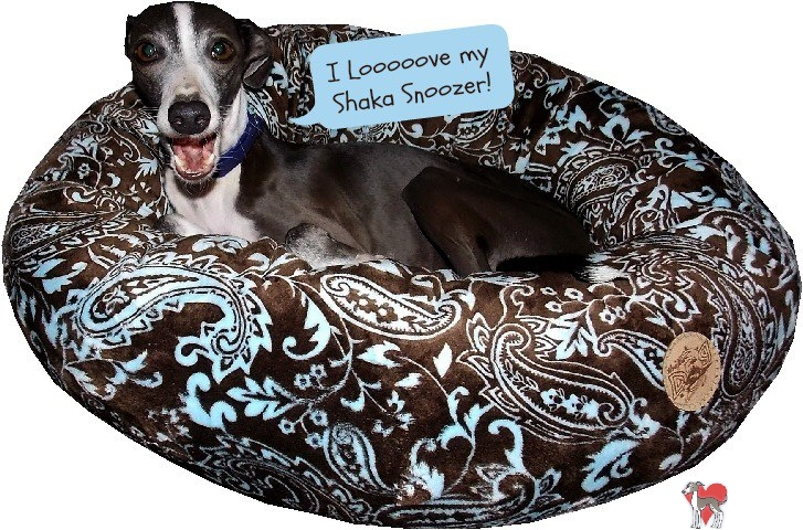 Shaka Dog Hawaii, italian greyhound collar, italian greyhound collars, custom italian greyhound bed,trendy, cool, feather, unique, custom, handmade, hand made, hawaii, iggy, ig
