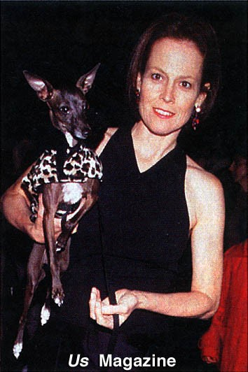 bacci, baci, sigourney weaver, actress, hollywood, celebrity, celebrities, famous, celebrity, celebrities, with, celebrities with italian greyhounds, Sigourney Weaver italian greyhound