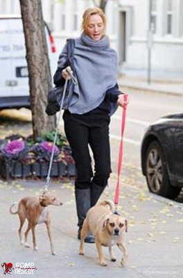 uma thurman, italian greyhound, ig, italian greyhound, iggy, thurman, uma, celebrity, female, parents, famous, actress, actor, actors, actresses, hollywood, celeb, celebrity