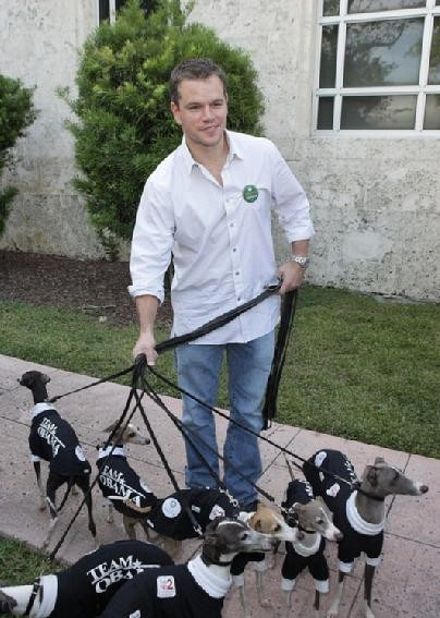 matt damon, italian greyhound, italian greyhound, matt damon, owner, walking, obama, matt damon italian greyhounds