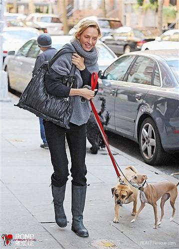 uma thurman, italian greyhound, ig, italian greyhound, iggy, thurman, uma, celebrity, female, parents, famous, actress, actor, actors, actresses, hollywood, celeb, celebrity