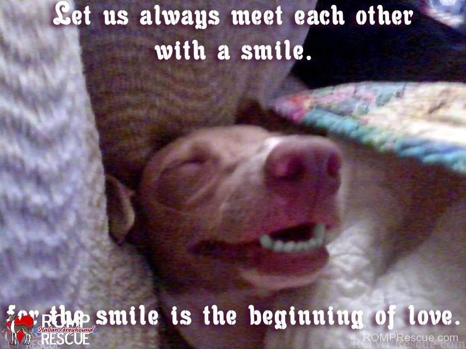 Dog smiling meme - photo#23
