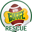puppy bowl x, rescue, shelter, chicago, italian greyhound, approved, featured