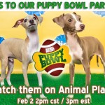 Puppy Bowl for sponsors