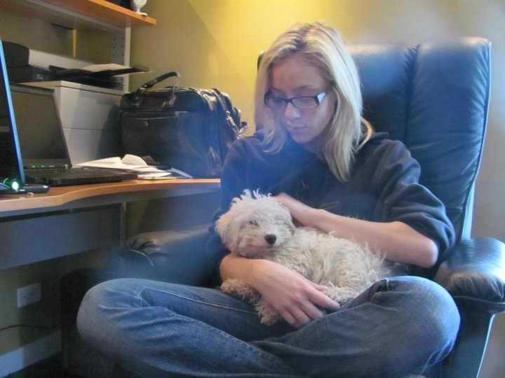 dog transport rescue, Chicago poodle puppy, poodle puppy, poodle rescue, poodle puppy rescue