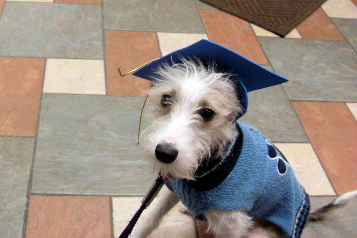 Canine Good Citizen Test, CGC chicago, chicago CGC, chicago Canine Good Citizen Test, Canine Good Citizen Test chicago