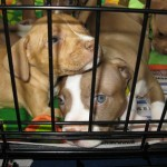 rescue transport puppies