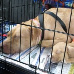 Dog rescue transport