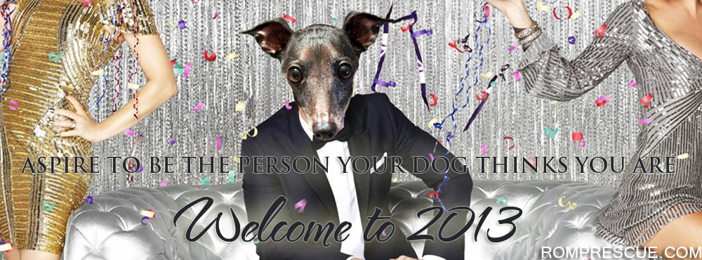 New Years Rescue, new years dog, dog new years, Happy New Year from the Dogs