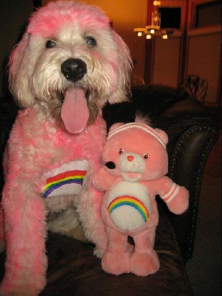 diy dog halloween costumes, DIY Dog costume, DIY dog halloween costume, care bears dog costume
