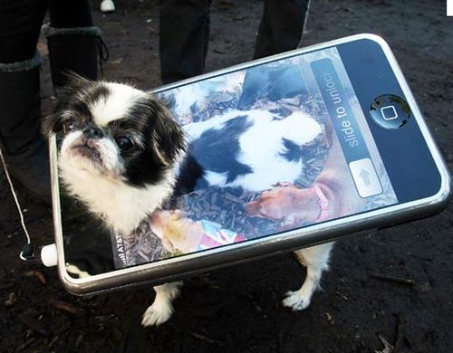 DIY halloween dog costume, iphone dog costume