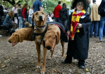 DIY halloween dog costume, harry potter dogs