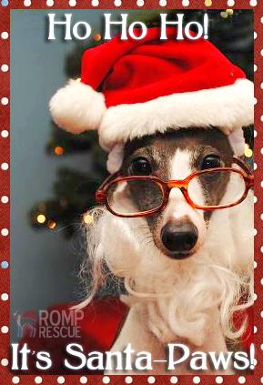 Dog Christmas Card Sayings, pet christmas card sayings, pet card sayings, doggy cards sayings, doggy christmas card, doggy holiday card, doggy holiday card sayings