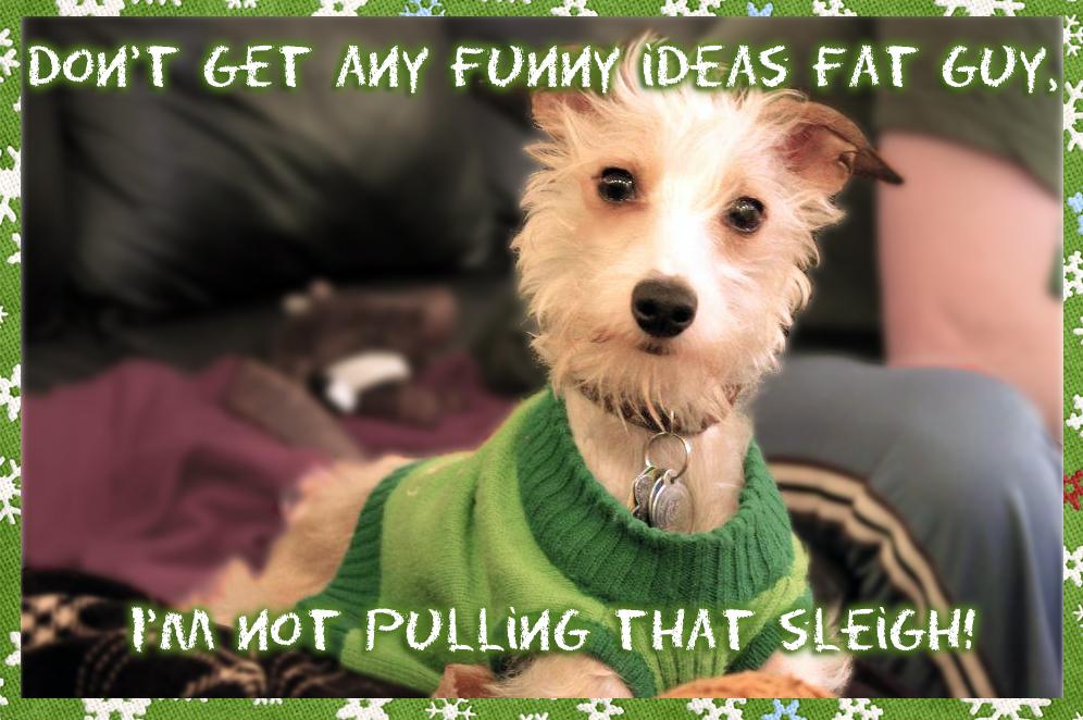 Dog christmas card, holiday christmas card, dog christmas card, italian greyhound christmas, christmas italian greyhound