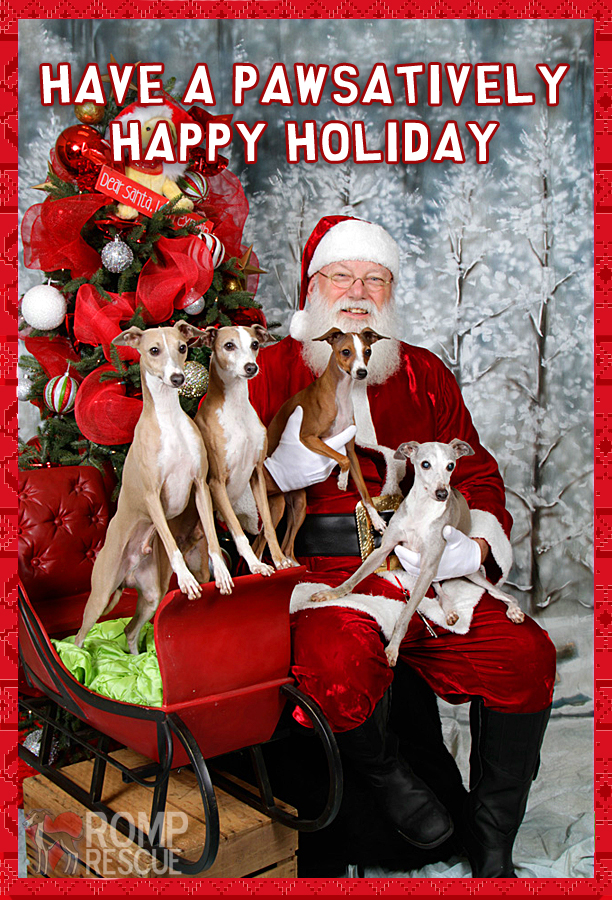 Doggy christmas card ,dog holiday card, pet holiday card sayings