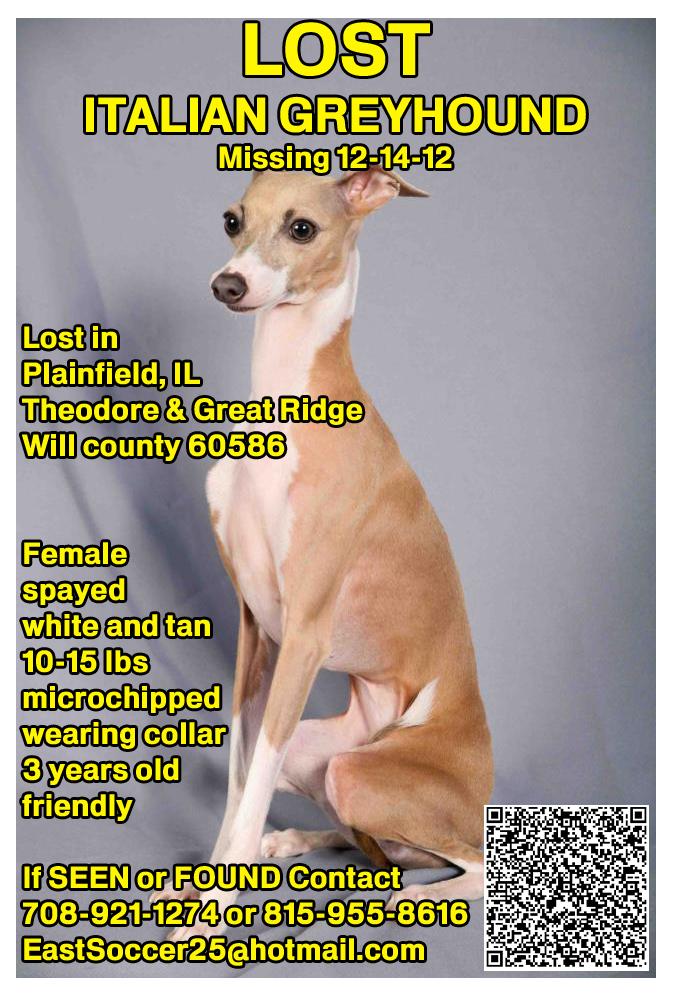 Lost Italian Greyhound, Lost Dog Tips, Missing Dog