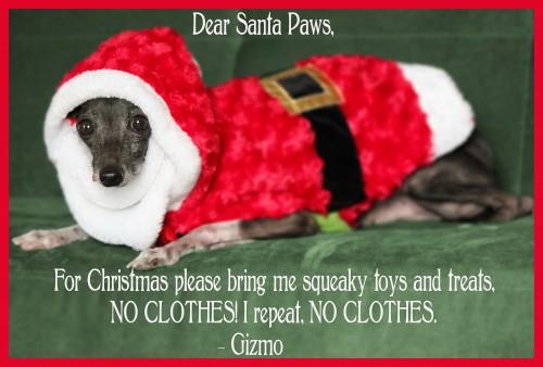 Santa Paws, Dog holiday card, xmas pet card, dog xmas card, funny holiday card dog, funny christmas card dog