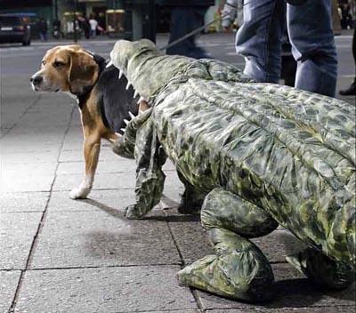 DIY Dog costume, DIY dog halloween costume, diy pet halloween costume, diy pet costume, dog eaten by a crocodile dog costume