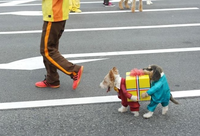 DIY Dog costume, DIY dog halloween costume, diy pet halloween costume, diy pet costume, package carrier dog costume, diy dog halloween costumes