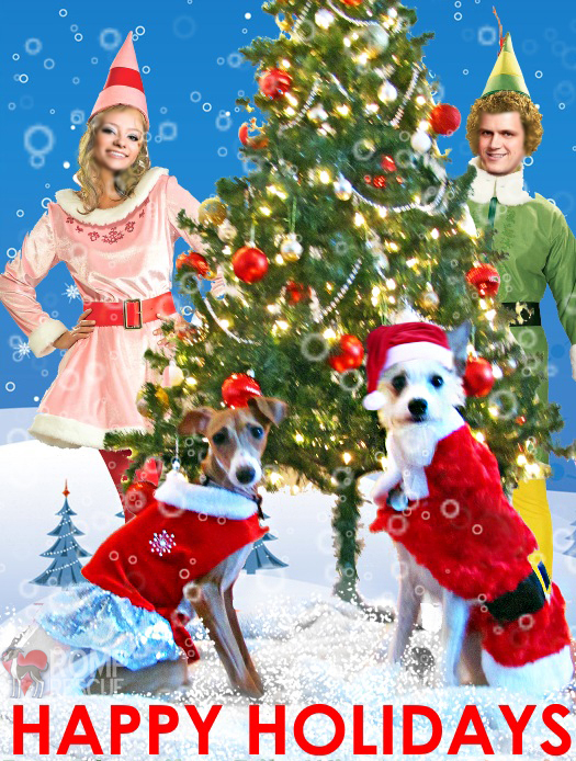 Christmas Card Ideas for your Dog, pet holiday card funny, funny pet card, funny pet holiday card, funny pet christmas card