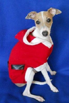 IG santa suit, Italian Greyhound santa suit, italian greyhound clothing, italian greyhound costume, italian greyhound holiday clothing