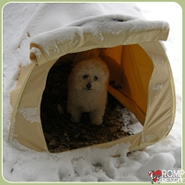 dog poop tent, Italian Greyhound Cold Weather