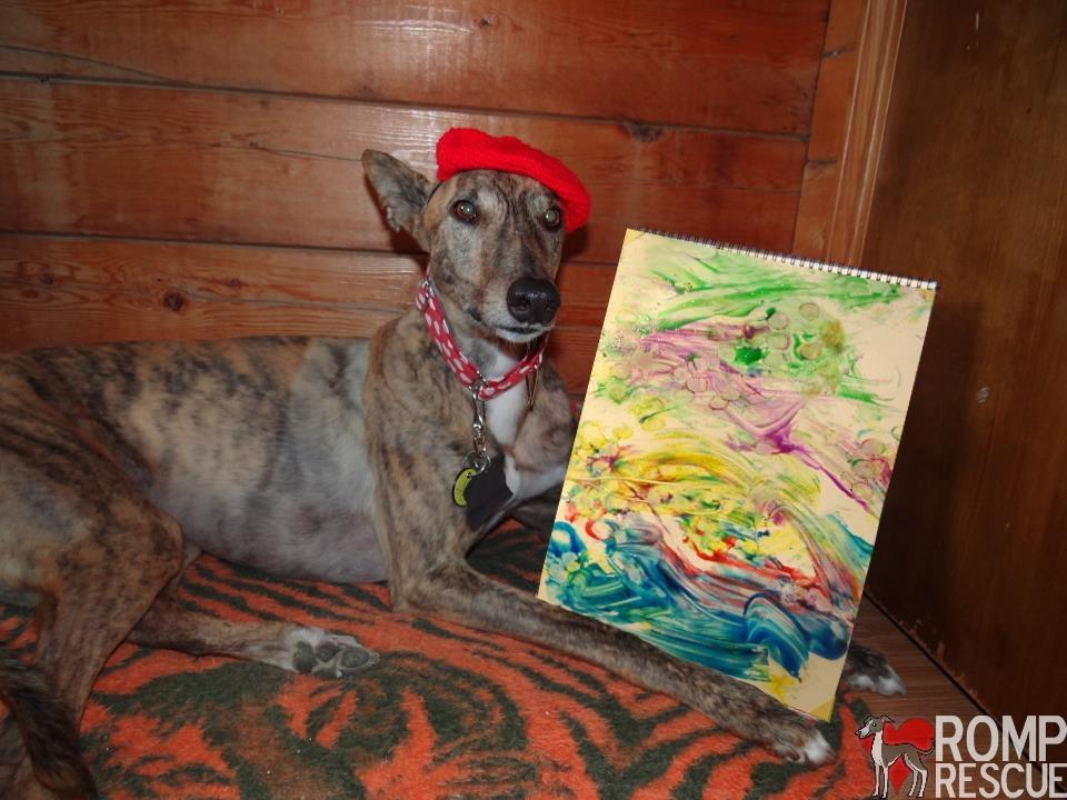 radar the painting dog, radar the paintar, radar, painting dog, dog that paints, auction, art, art work, donation, discount, promo, discount, coupon, promo code, discount code, gaea, berner, greyhound, italian greyhound