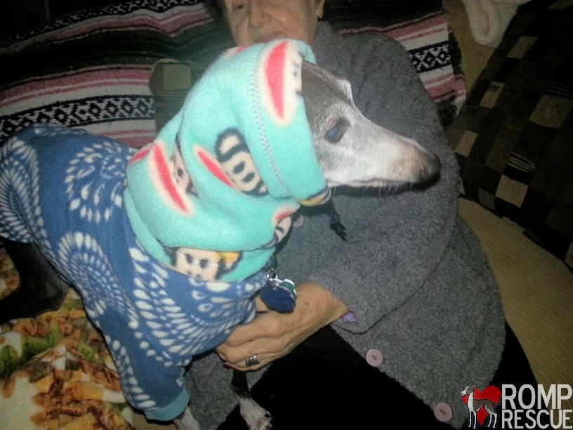 online fundraiser auction, online fundraiser, turbothreads, turbo, threads, coupon, code, promo, promo code, coupon code, discount, auction, snood, italian greyhound, iggy, ig