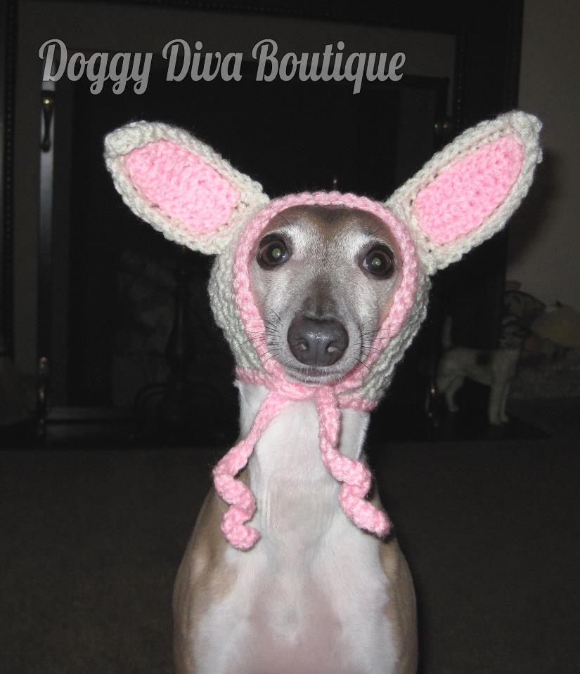 doggy diva boutique, italian greyhound hat, funny, cute, knit, crochet, Doggy Diva Boutique