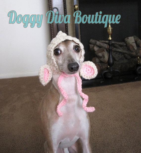 doggy diva boutique, italian greyhound hat, funny, cute, knit, crochet