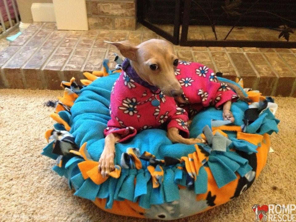 turbothreads, italian greyhound, italian greyhound snood, dog snood, dog hood, italian greyhound neck, italian greyhound hood, collar, leash, bed, custom, handmade, iggy, ig, rescue, romp rescue