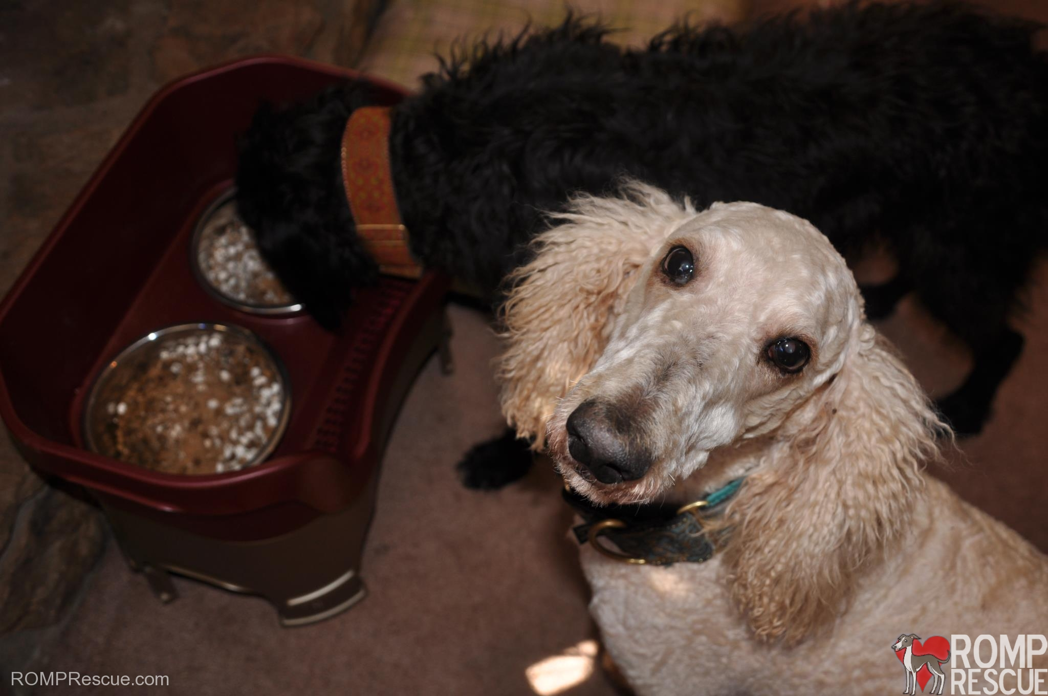 neater feeder, cranberry, happy customer, doggy approved, dog approved