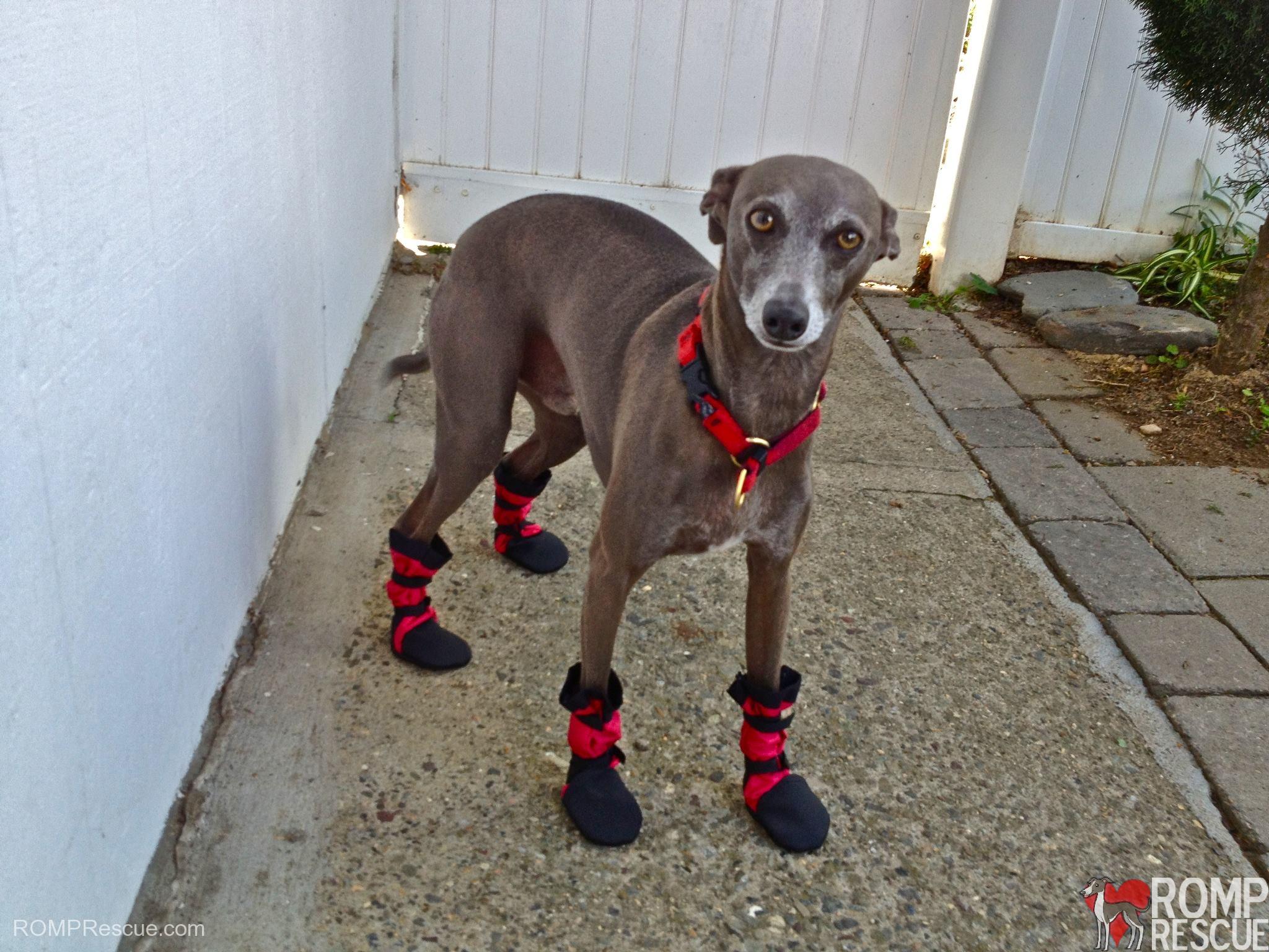 Italian Greyhound boots, custom dog boots, italian greyhound custom boots, woof woofs, doggy booties, dog booties, snow boots, dog snow boots