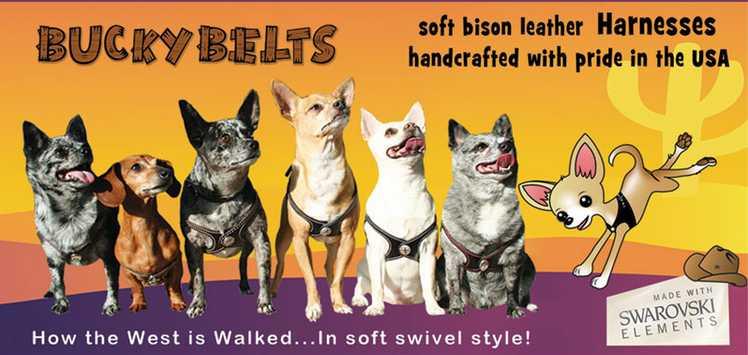 pet flys italian greyhound harness, harness, dog harness, trendy dog harness, trendy harness, fashionable dog harness, dog harness
