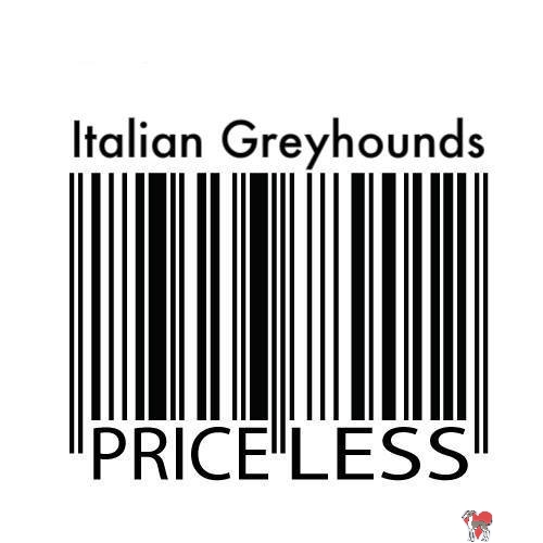 Italian Greyhounds Priceless