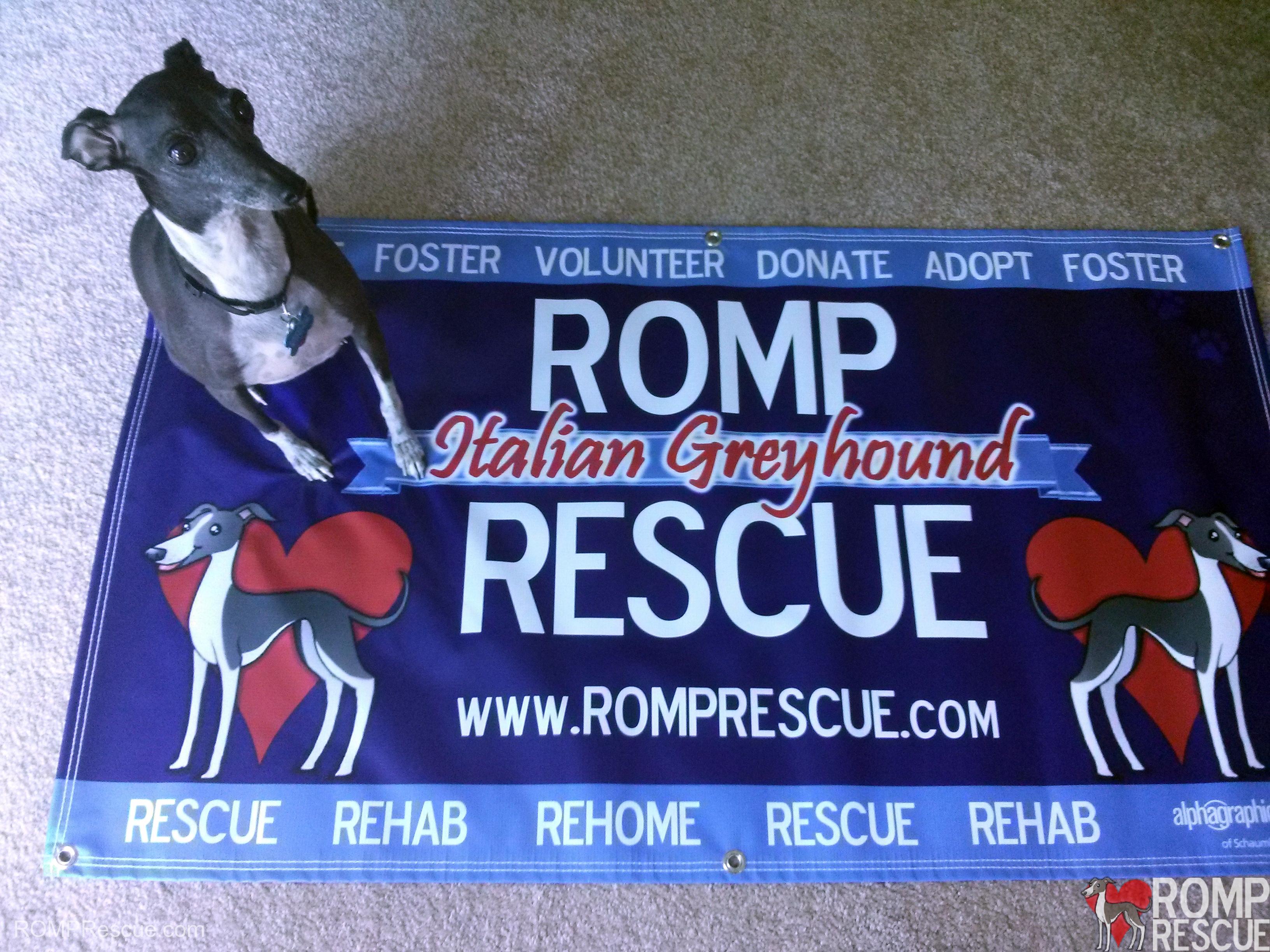 AlphaGraphics Schaumburg, Schaumburg banner, alpha graphics, alpha graphics schaumburg, romp rescue banner, dog rescue, chicago dog rescue, illinois italian greyhound