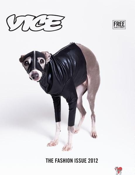 Italian Greyhound Cover Model, Bryan Derballa, vice, italian greyhound, magazine, cover