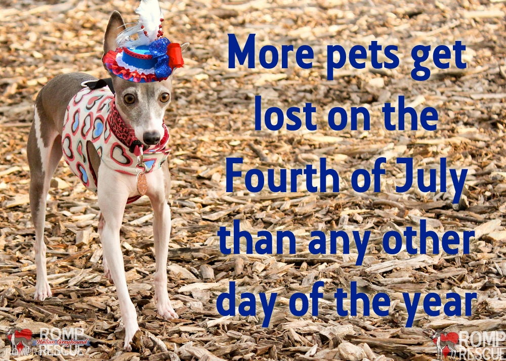 July 4th Pet Safety, Pets Get Lost, july fourth safety tips, pets, dogs, dog, pet, more pets get lost, july 4th, 4th, july, july fourth, fourth of july, 4th of july, safety, fireworks, tips, safety