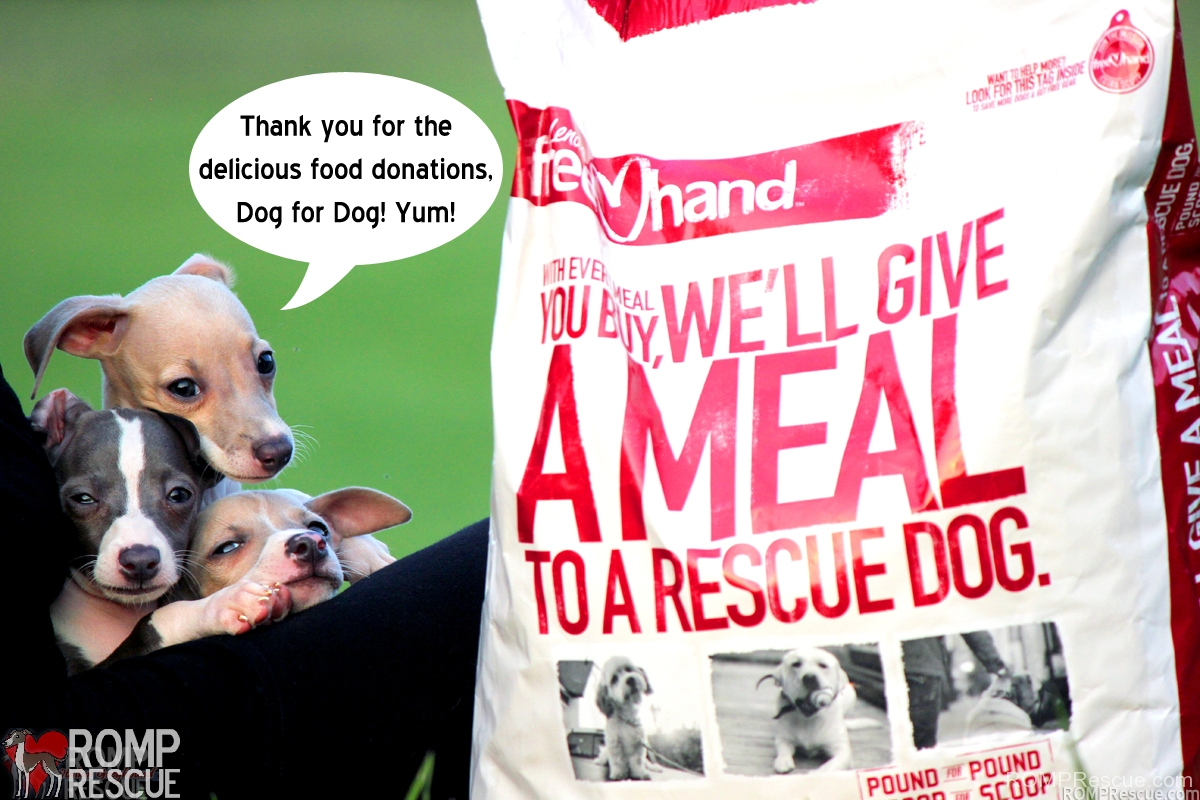 dog for dog, lend a hand, dog food donation, chicago, illinois, italian greyhound, italian greyhound, rescue, romp rescue, free, puppies, puppy, cute, funny