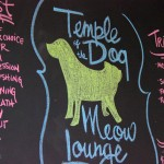temple of the dog and meow lounge, temple of the dog, dog, chicago groomer, chicago groomer, chicago, groomer, dog spa, dog salon, chicago dog spa, chicago dog salon, maltese, maltese rescue, chicago maltese rescue, female, white, adult, ladies