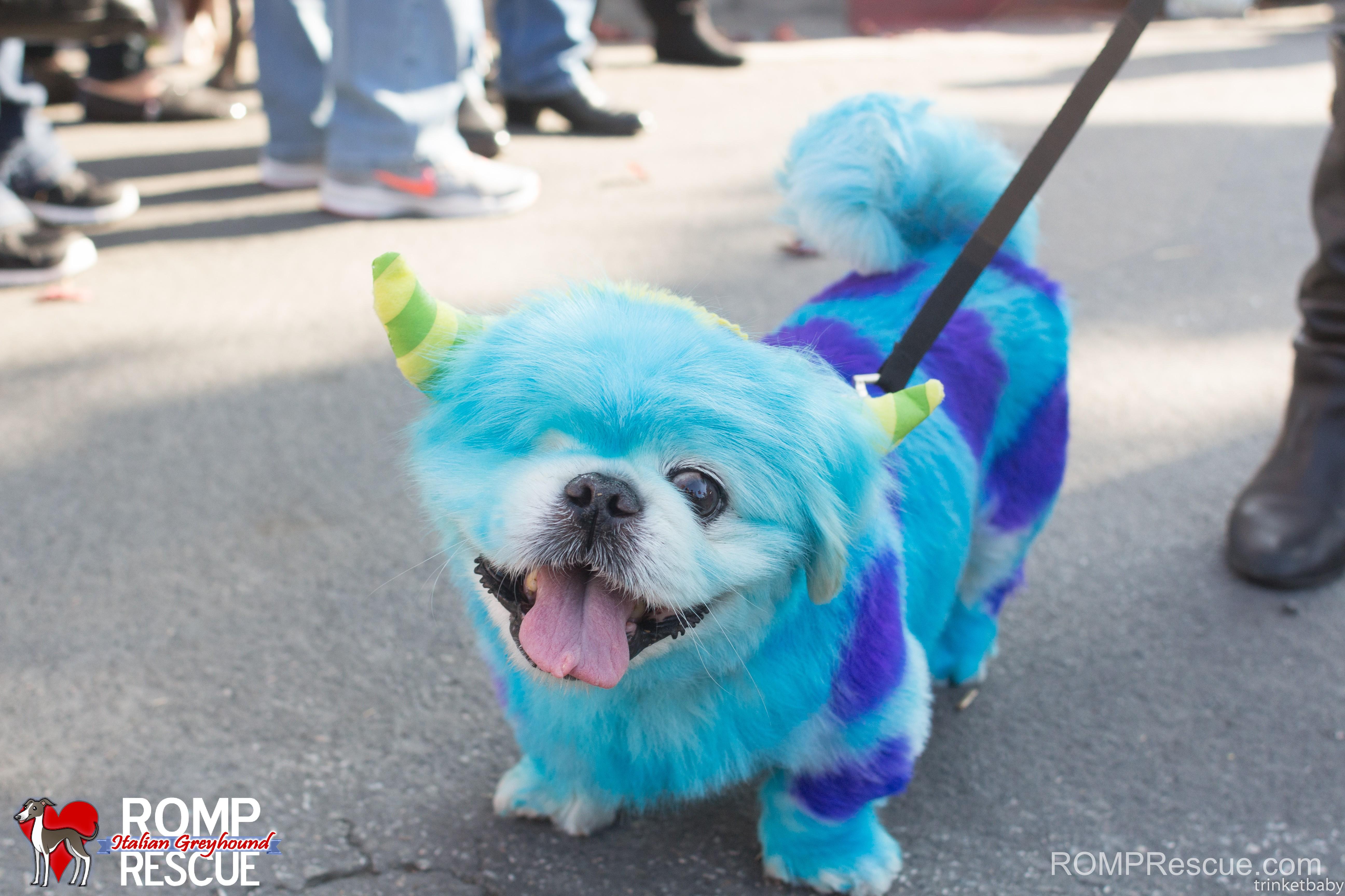 pet paint, dog paint, halloween costume, pet safe paint, pet paints, monsters inc, monster