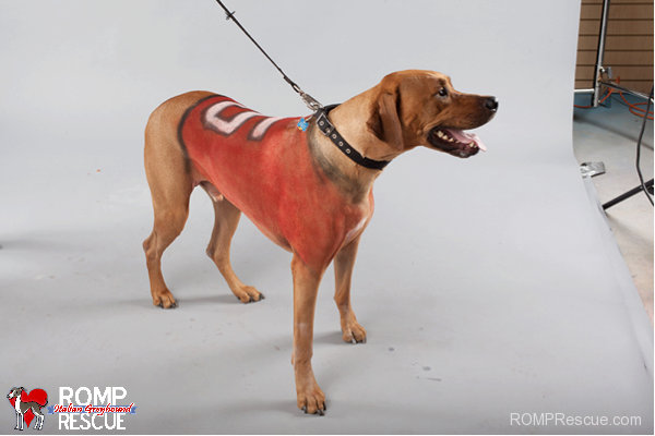 pet paint, dog paint, halloween costume
