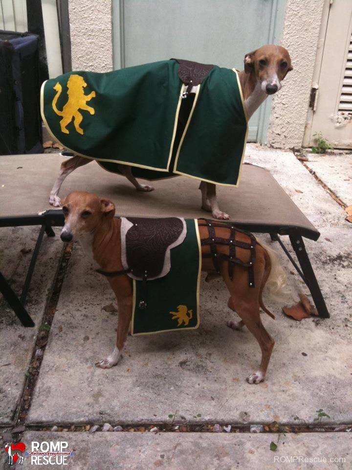 medieval horse, halloween, costume, italian greyhound, dog, diy,