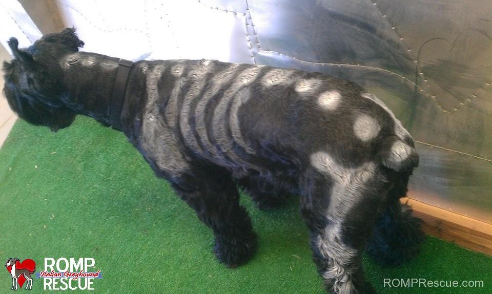 pet paint, dog paint, halloween costume, skeleton