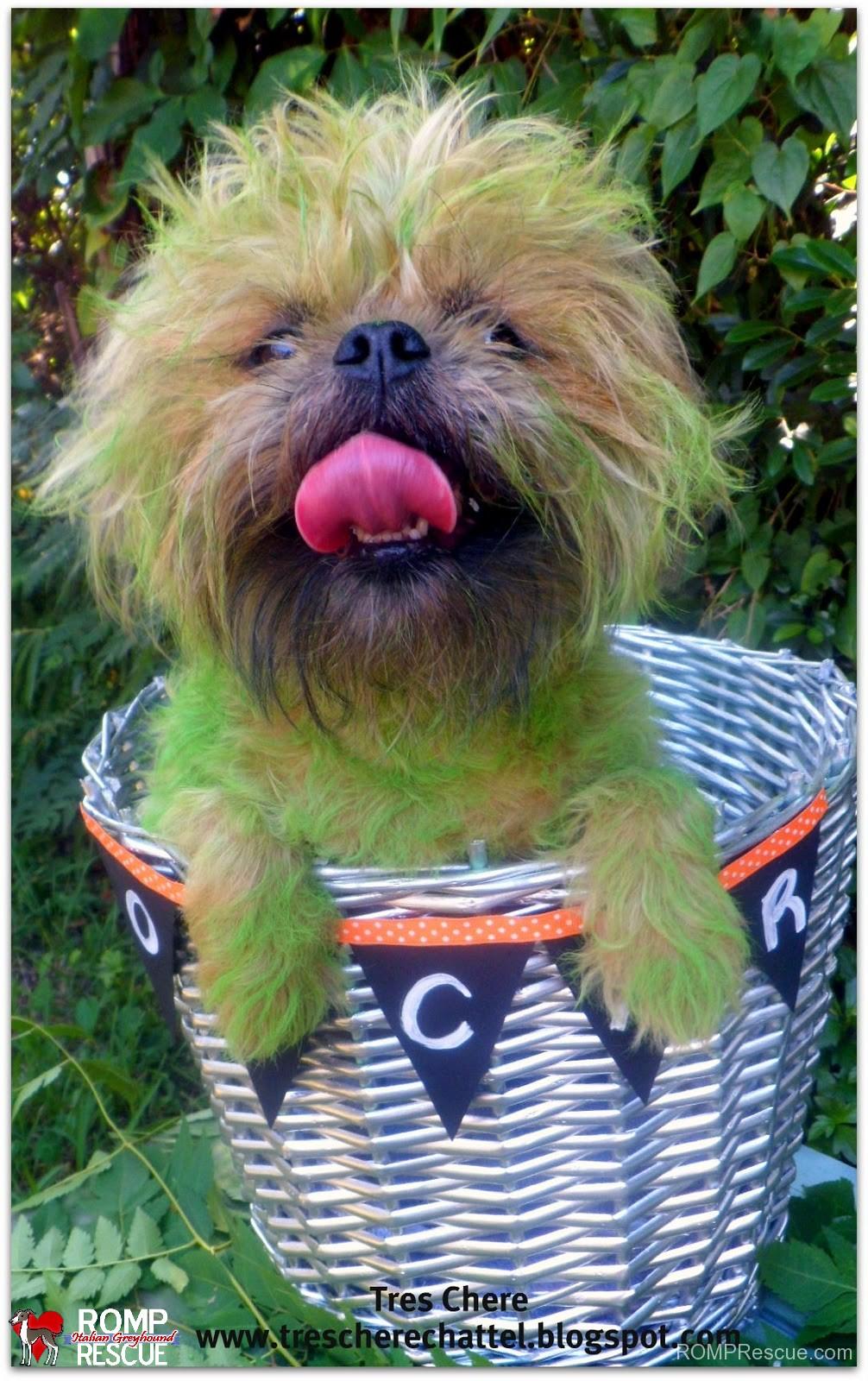 pet paint, dog paint, halloween costume, oscar, the grouch, grouch, seaseme street