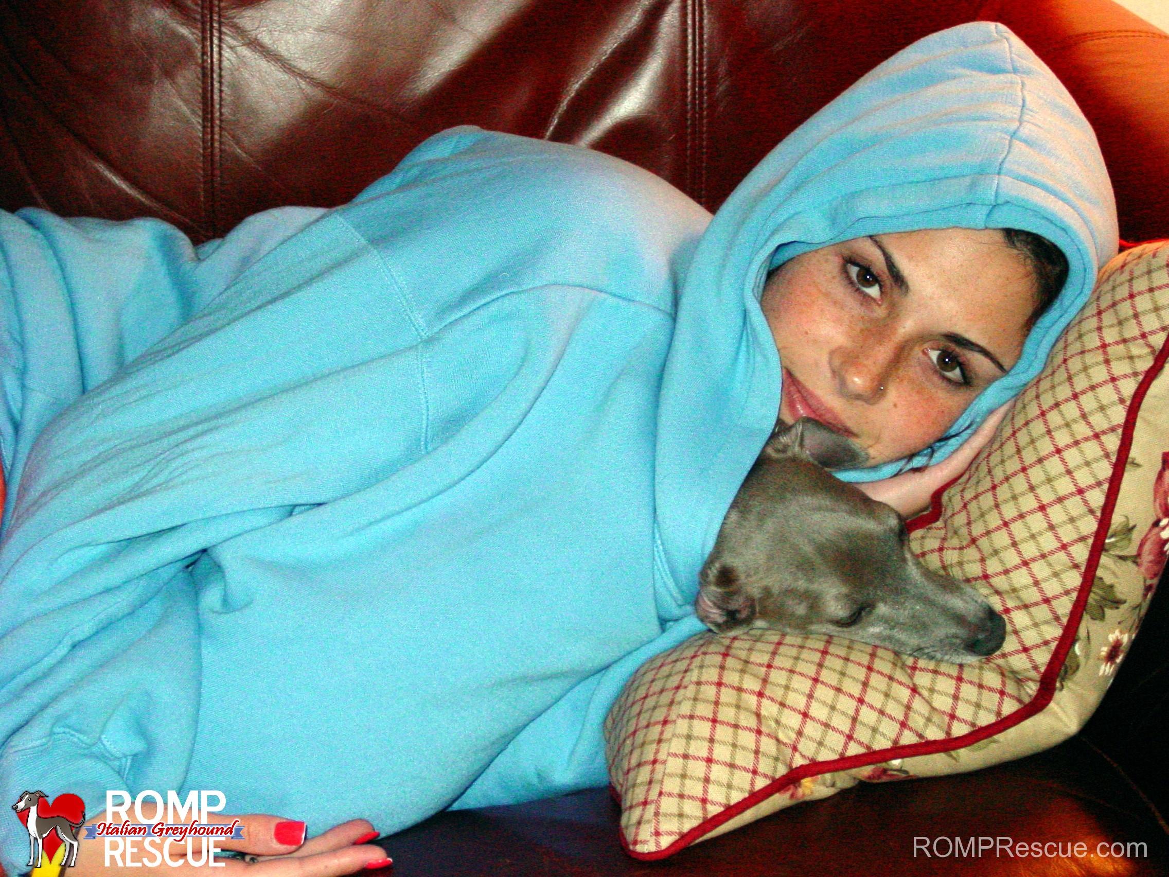 Italian greyhound, sweater, shirt, in, inside, snuggling, snuggle, sleep, coat, top, blouse